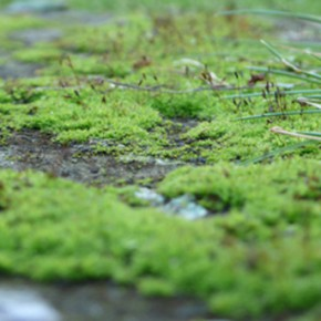 Moss-Eye View: An Urban-Ecological Tour of Bryophytes