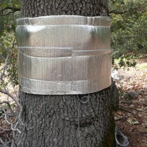 Sensing an Experimental Forest